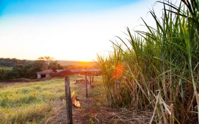 How We're Partnering with Family Cachaça Distilleries for a Sustainable Future