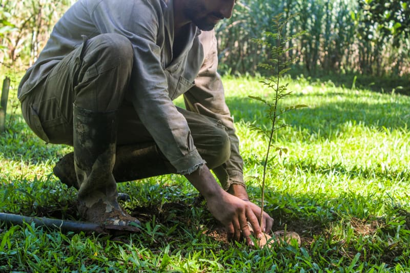A Look Inside the Un-Endangered Forest